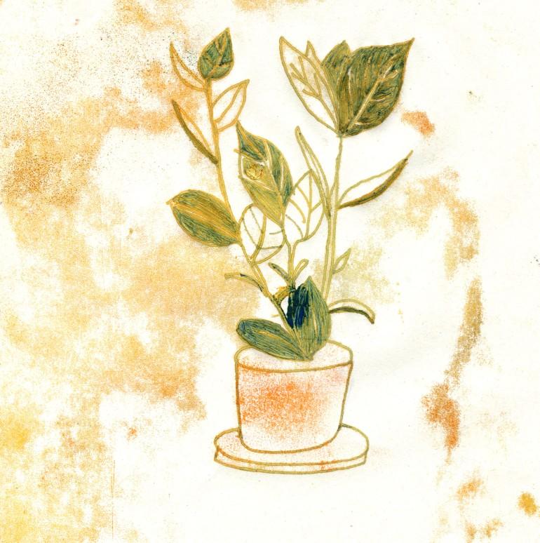 zimmerpflanze-1
